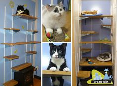 Urban Tails: Posh Cat Boarding in Vancouver Cat Ramp, Vancouver, Cat Hotel, Tidy Cats, Beautiful Kittens, What Cat, Cattery, Pet Furniture, Cat Boarding