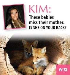 Peta message to fur hag Kim Kardashian.