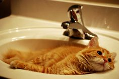 Community Post: 20 Cats In Sinks
