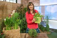 Nutritionist, Julie Daniluk, reveals nutritional foods you can find in your backyard! Healthy Gourmet, Healthy Eating, Healthy Recipes, Lambs, Free Food, Health And Wellness, Dandelion, Backyard, Nutrition