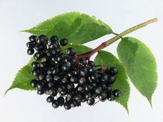 Blackberry, Fruit, Food, Essen, Blackberries, Meals, Yemek, Rich Brunette, Eten