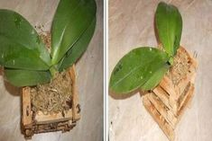 Solution for Rotting Orchid Roots - So Crafty Wooden Basket, Bamboo Basket, Orchid Roots, Plastic Flower Pots, Bonsai, Orchids, Pesto, Plant Leaves, Bloom