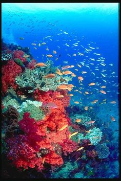 Great Barrier Reef - I want to go scuba diving there so bad, though I'm terrified