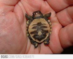 Awe baby turtle