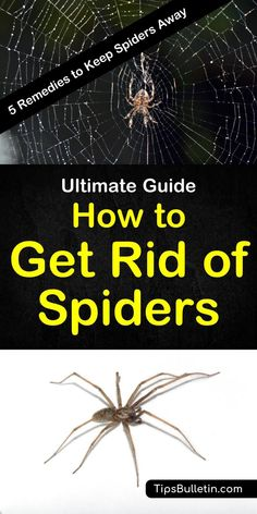 How to get rid of spiders - includes 5 home remedies to keep spiders out of your home.#spider #getridof #repellent