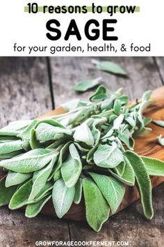 Sage Herb, Sage Plant, Gardening For Beginners, Gardening Tips, Vegetable Gardening, Herb Garden Design, Sage Garden, Garden Fun, Garden Ideas