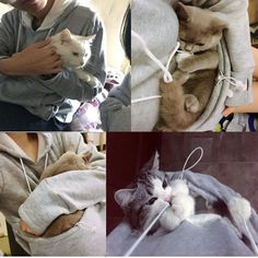 Cat Lovers Hoodie Cuddle Pouch Plus Size Hoodies – thebigblackfriday Kangaroo Pouch, Crazy Cat Lady, Crazy Cats, Ways To Cuddle, Plus Size Hoodies, Hamster, Pet Paws, Gift Ideas, Rabbits