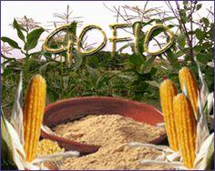 Gastronomia Canaria... Il sapore del Gofio - Isole Canarie