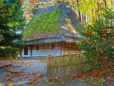 Ukrainian historical country wooden hut with thatched moss overgrown roof