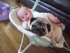 Pugs seem to have a great time with kids. Pugs are very friendly and it is natural to see Pugs and kids playing together. Amor Pug, Pug Love, I Love Dogs, Cute Pugs, Cute Puppies, Raza Pug, Animal Pictures, Cute Pictures, Baby Pictures