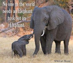 Image result for save the elephant day images
