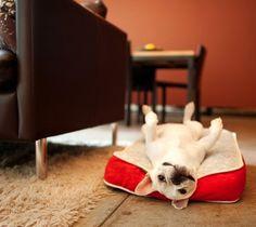 #dog #animal #lifeisbeautiful