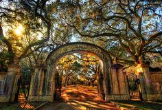 Entrance to Wormsloe Plantation, Savannah Georgia