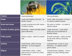 Asexual and sexual reproduction in plants ks2 bitesize