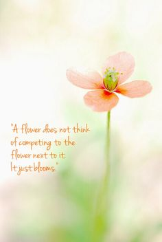 """A flower does not think of competing to the flower next to it. It just blooms."""