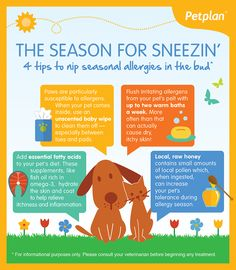 Pet Plagued By Sneezing & Scratching? Try These 4 Tips To Nip Seasonal Allergies In The Bud #Infographic