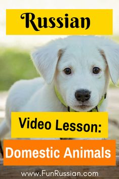Learn the names of the domestic animals in Russian in this fun Russian video lesson! Learning Russian words, learn Russian words, fun Russian words, cool Russian words, learning Russian, Russian words worksheets, Russian language, Russian words articles, Russian words posts.