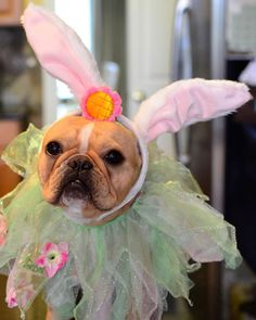 Easter Costumes for Your Pet!   Savoring Simplicity