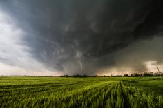 Title: Beautiful Storm. A rope tornado creates a dramatic scene in a Kansas wheat field.