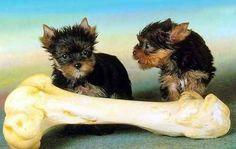 Ernährungsberatung - Kleintierpraxis Dr.Uzur