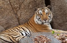 Phnom Tamao Wildlife Rescue Center | GAIA PROJECT