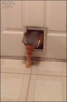 animated gif: kitty is straining the limits of his kitty door