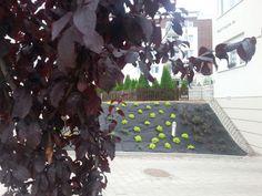 Przytulna skarpa Spiraea japonica