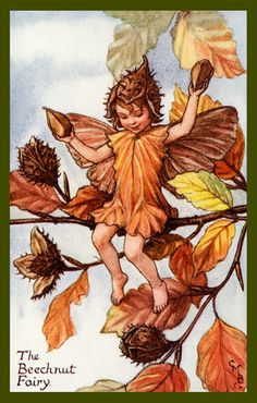 The Beechnut Fairy   Love beechnuts...used to steal and eat them from the 'nature table'
