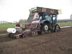 Planting the tulip bulbs in Andijk, Holland. #tulpen #planten #WestFriesland    http://www.ruiterwever.nl/nl/planten