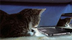 유쾌한 고양이.jpg