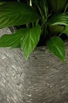 """Dieser schöne Pflanzkübel in der abgrundeten """"Block"""" Form ist eine echte Neuheit für Garten, Terrasse und Eingangsbereich. Der Pflanzkübel ..."""