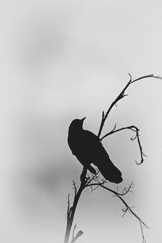 16 Ideas For Black Bird Silhouette Photography Corvo Tattoo, Bird Silhouette Tattoos, Crow Silhouette, Silhouette Fotografie, Rabe Tattoo, Black Bird Tattoo, Tattoo Bird, Raven Bird, Crow Bird
