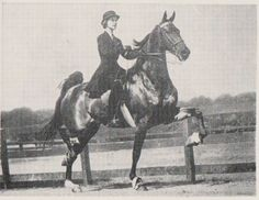 Croft's Star was shown by Mary Anne O'Callahan (now Cronan) as Scarlet Ribbons. Her babies were: Red Thread, 1963, mare, by CH Gallant Guy O'Goshen Ribbonette 1964, mare, by CH Gallant Guy O'Goshen CH Maker's Mark, 1965, stallion, by CH Valley View Supreme CH Crimson Bow, 1966, mare, by CH Gallant Guy O'Goshen Canterbury Peavine, 1969, mare, by Indiana Peavine Canterbury Lane, 1970,mare, by Oman's Desdemona Denmark The New York Times descends from Canterbury Lane.