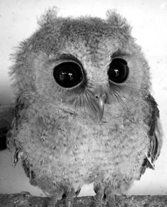 eule owl | Tumblr
