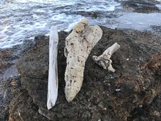 Set of 3 Driftwood Pieces for Crafting from Greek Beaches, Long Natural Driftwood in really Good Quality, Bulk Driftwood, Beach Wood Driftwood Beach, Beach Wood, Hag Stones, Ocean Shores, Aquarium Decorations, Wood Sizes, Beach Stones, Beach Crafts, Natural Shapes