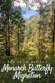 The monarch butterfly migration in Mexico is quickly dwindling. Learn how to see it before it's too late, and what you can do to help the monarch population recover and grow! Monarch Butterfly Migration, Animal Jam, Reptile Cage, Reptile Enclosure, Veterinary Technician, Exotic Fish, Best Hikes, Warrior Cats, Horse Care