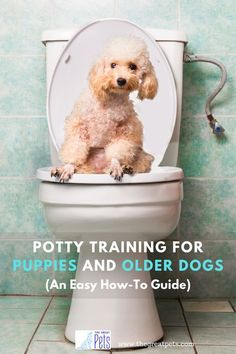 4 Steps to Crate Train Your… #dogtraining Police Dog Training, Agility Training For Dogs, Potty Training Tips, Crate Training, Training Your Puppy, Leash Training, Training Courses, Petsmart Dog Training, Puppy Toilet Training