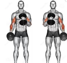 Illustration about Cross body hammer curls. Exercising for bodybuilding Target muscles are marked in red. Initial and final steps. Illustration of brachioradialis, biceps, curls - 68285511 Fitness Workouts, Gym Workouts For Men, Gym Workout Videos, Weight Training Workouts, Gym Workout For Beginners, Chest Workouts, Forearm Workout, Dumbbell Workout, Workout Regimen
