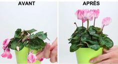 L'astuce pour sauver une plante en mauvais état - Astuces de grand mère