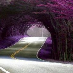 Aromatic Natural Tunnel
