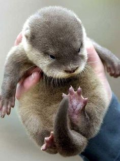 Fistful of Otter