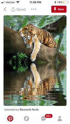 Top 10 Photos of Big Cats - Top Inspired Nature Animals, Animals And Pets, Funny Animals, Cute Animals, Animals In The Wild, Lazy Animals, Safari Animals, Beautiful Cats, Animals Beautiful