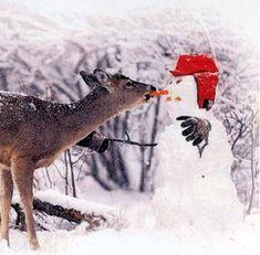 Winter Reds #WinterRed #redwinter
