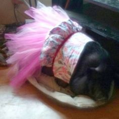 Princess Piggy Looks Fabulous in her Birds Of A Feather Tutu Dress!!!
