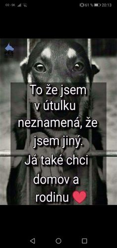 Cute Dogs, Poems, Quotes, Cheesecake, Heart, Animals, Quotations, Animales, Animaux