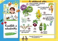 Zöldborsó után - gazigazito.hu Herb Garden, Vegetable Garden, Garden Plants, Home And Garden, Gardening Tips, Herbs, Flowers, Outdoor, Google