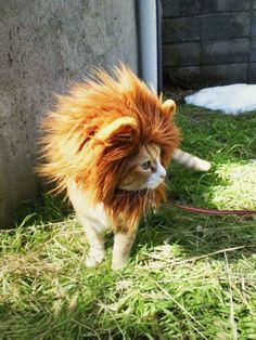 Just Arrived: 21 Super Cute Animal Pics to Cheer You Up