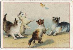 VAN DER TAS CACAO vintage advertising card