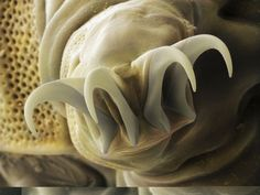 Their feet look like this.   17 Things That Prove Tardigrades Are Basically Superheroes