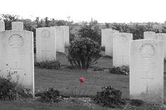 Poppy between the graves